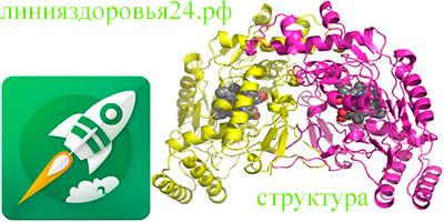 активаторы синтазы оксида азота