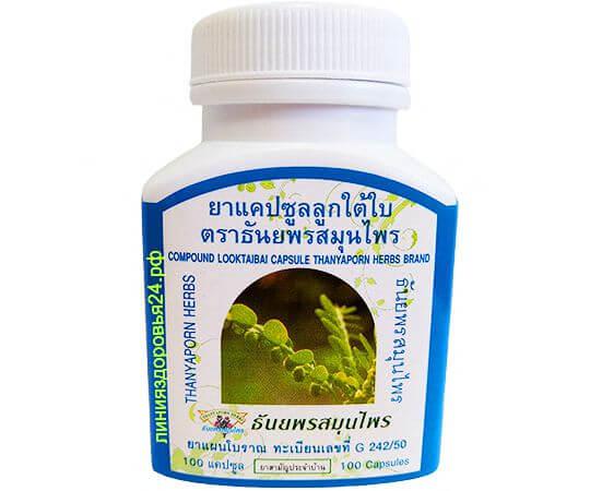 чанка пьедра, Phyllanthus niruri